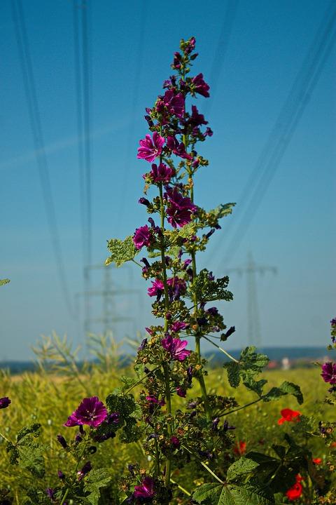 Flowers, Landscape, Field, Mood, Color, Nature