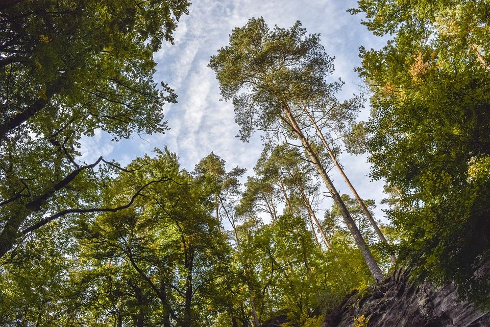 Forest, Nature, Landscape, Trees, Green, Mood, Light