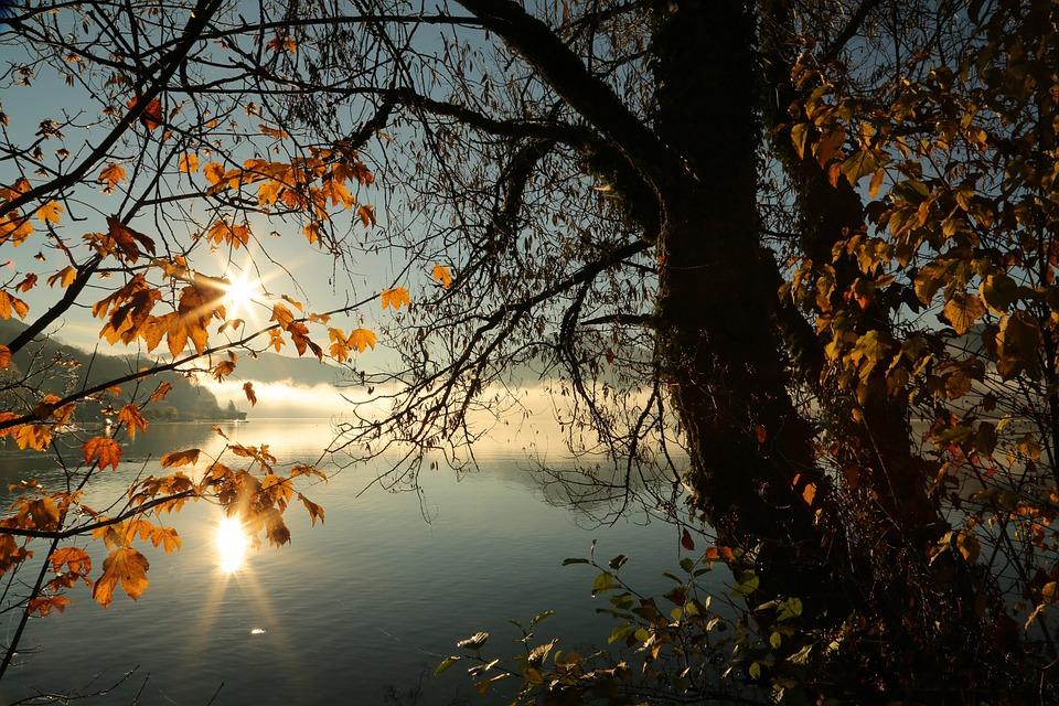 Landscape, Autumn, Nature, Tree, Water, Mood, Morning