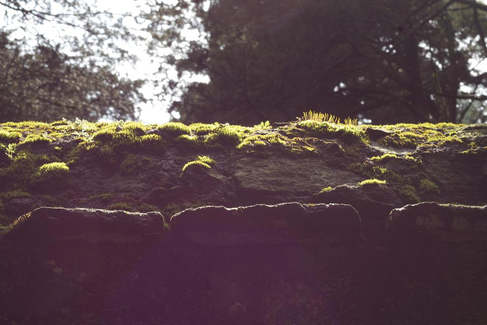 Moss, Green, Life, Forest, Nature, Landscape, Bark