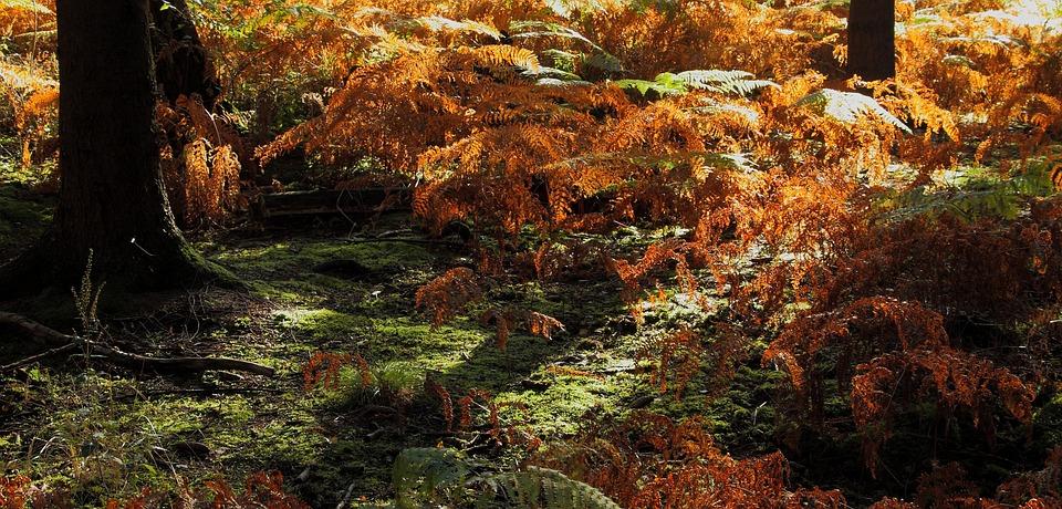 Forest, Forest Floor, Fern, Moss, Nature, Landscape