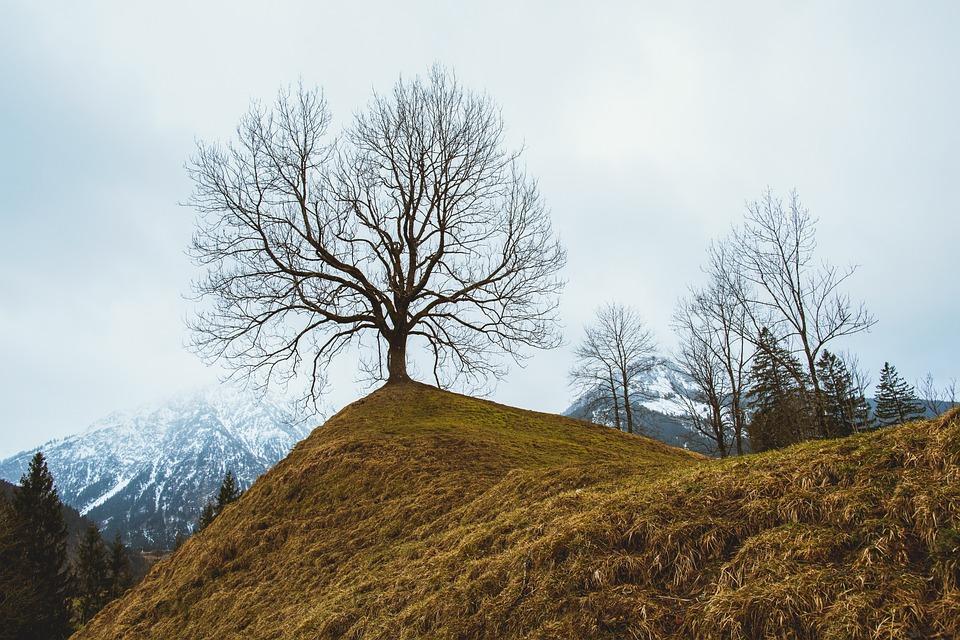Landscape, Mountain, Nature, Tree, Foliage, Summit