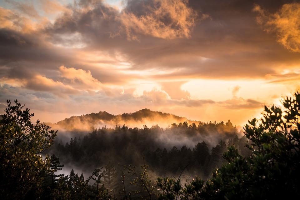 Mountains, Forest, Sunset, Fog, Mist, Landscape