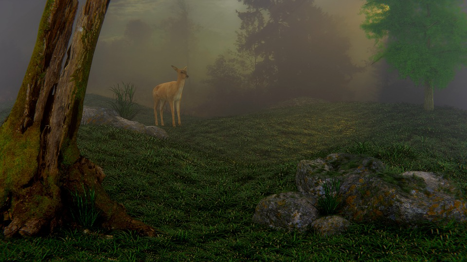 Forest, Deer, Fog, Nature, Dawn, Landscape, Strain, 3d