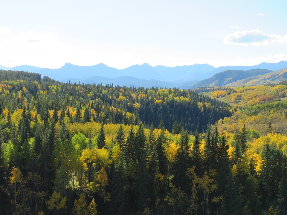 Forest, Mountains, Autumn, Nature, Landscape, Trees