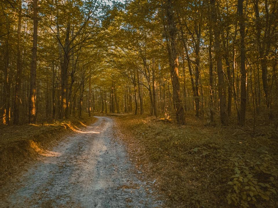Forest, Autumn, Nature, Landscape, Trees, Leaves, Path