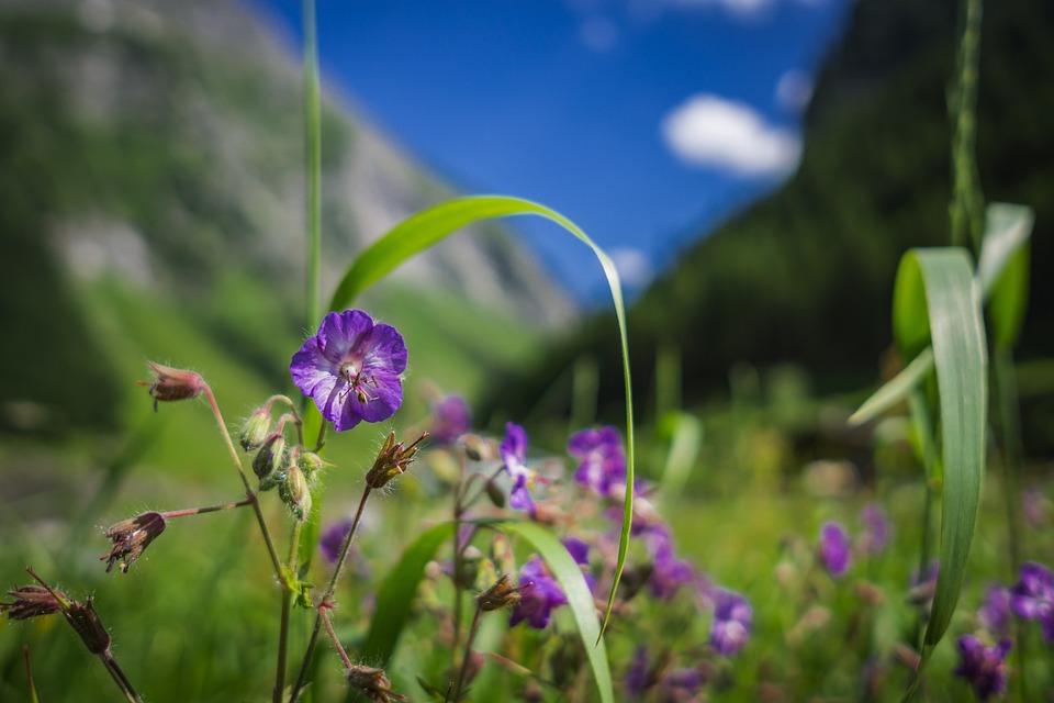 Flower, Landscape, Nature, Summer, Blossom, Bloom