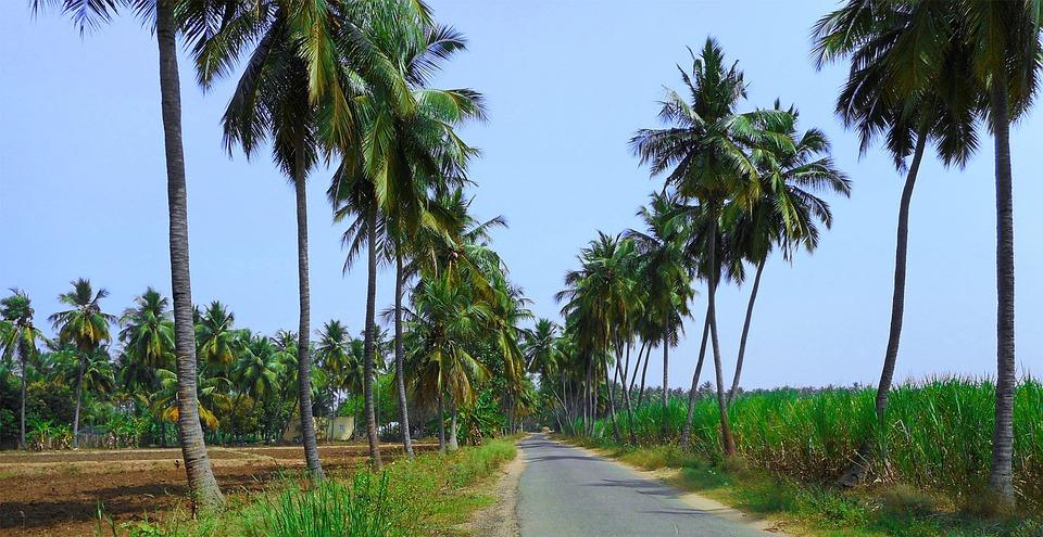 Nature, Landscape, Coconut, Tree