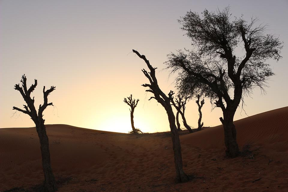Tree, Dry, Landscape, Nature, Desert