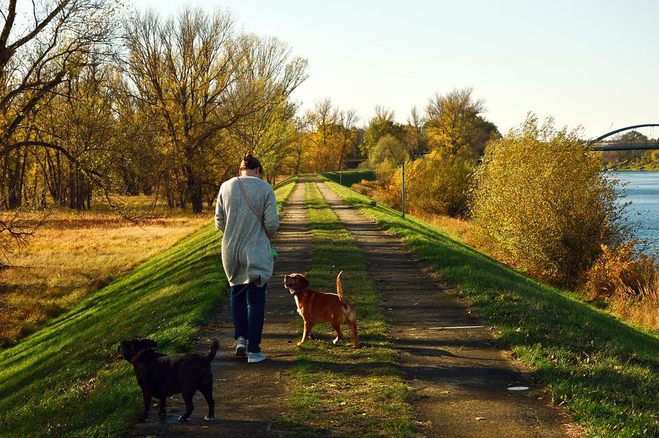 Walk, Human, Person, Woman, Dogs, Landscape, Nature