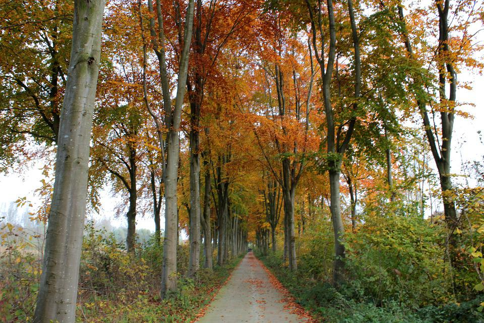 Beukenlaan, Forest, Landscape, Nature, Fall Colors