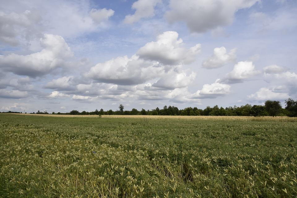 Fields, Landscape, Nature, Sky, Field, Panorama