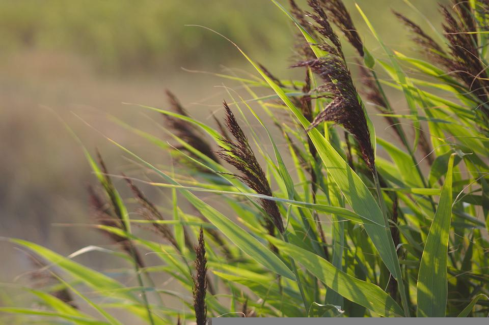 Grasses, Nature, Grass, Landscape, Sunset, Meadow