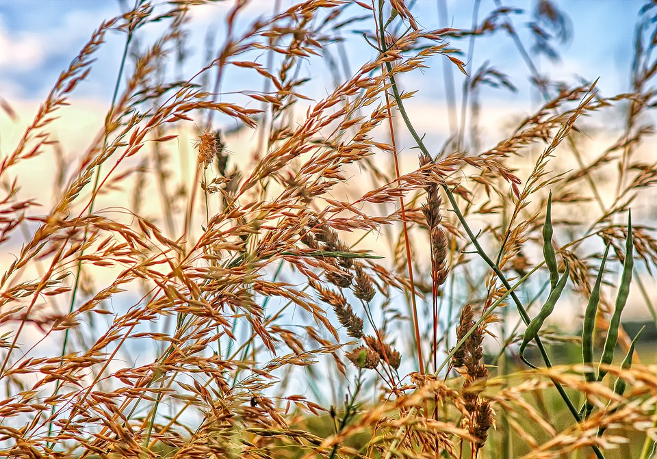 Nature, Landscape, Grass, Grasses, Halm, Of Course, Sky