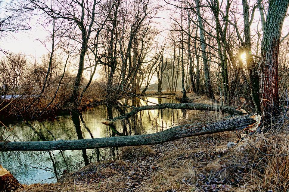 Nature, Trees, Winter, River, Landscape, Waters