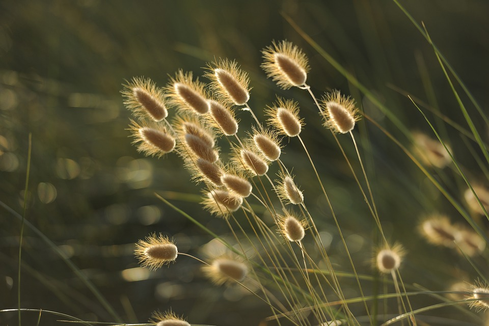 Light, Sunset, Nature, Spikes, Landscape, Field