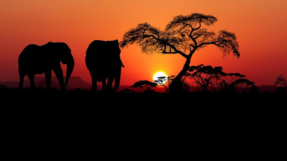 Sunset, Savannah, Africa, Nature, Elephants, Landscape