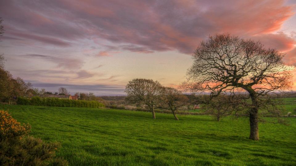Landscape, Tree, Dawn, Grass, Sunset, Nature