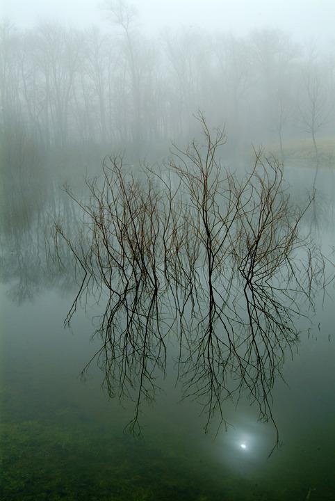 Nature, Reflection, Tree, Water, Landscape, Dawn, Fog