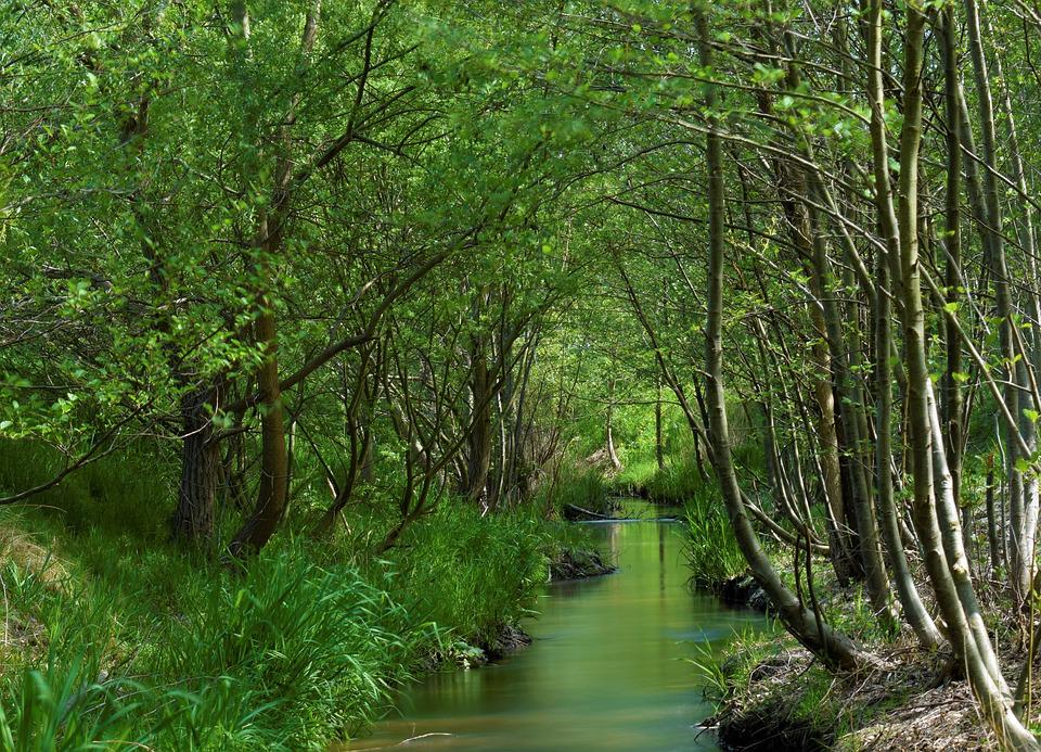 Bach, Forest, Landscape, Creek, Nature, Trees, Water