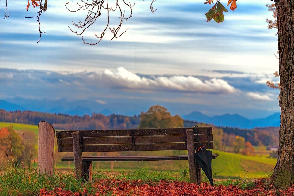 Bank, Umbrella, View, Nature, Tree, Landscape, Sky