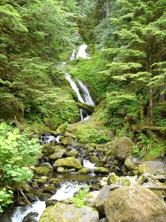 Waterfall, Lake Quinault, Nature, Landscape, Natural