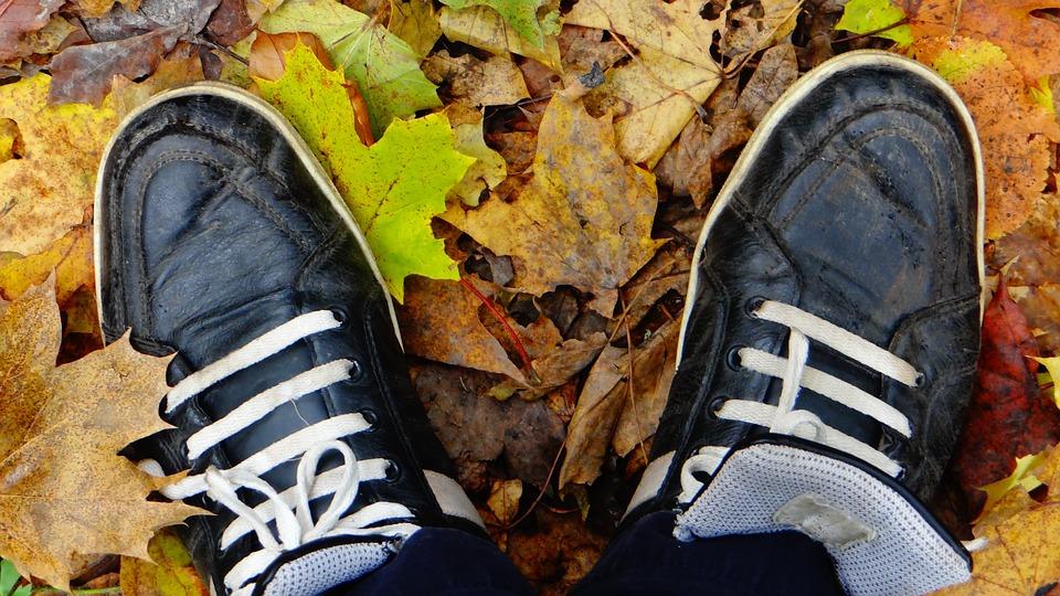 Forest, Autumn, Nature, Trees, Landscape, October