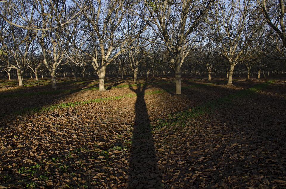 Trees, Shadow, Orchard, Forest, Landscape, Farm