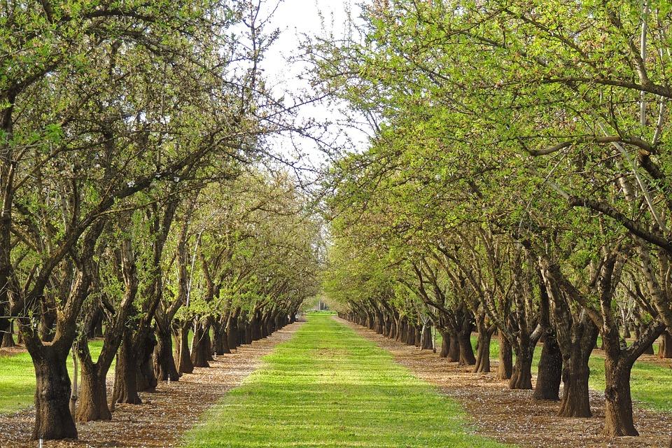 Tree, Nature, Landscape, Wood, Branch, Spring, Orchard