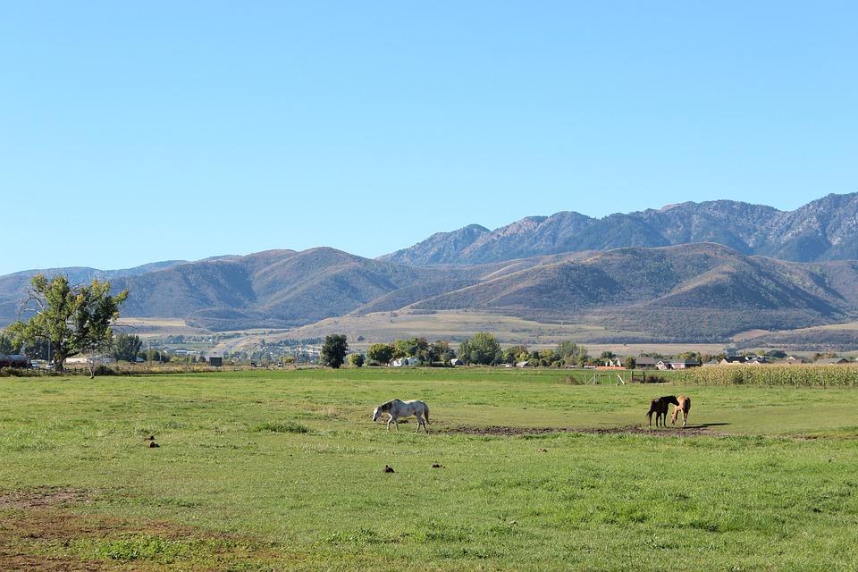 Meadow, Landscape, Grass, Pasture, Farm, Outdoor