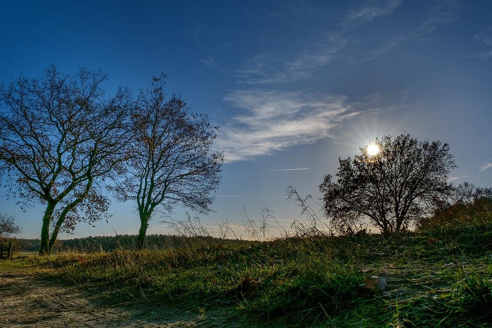 Tree, Sky, Blue, Landscape, Nature, Outdoor, Sunny