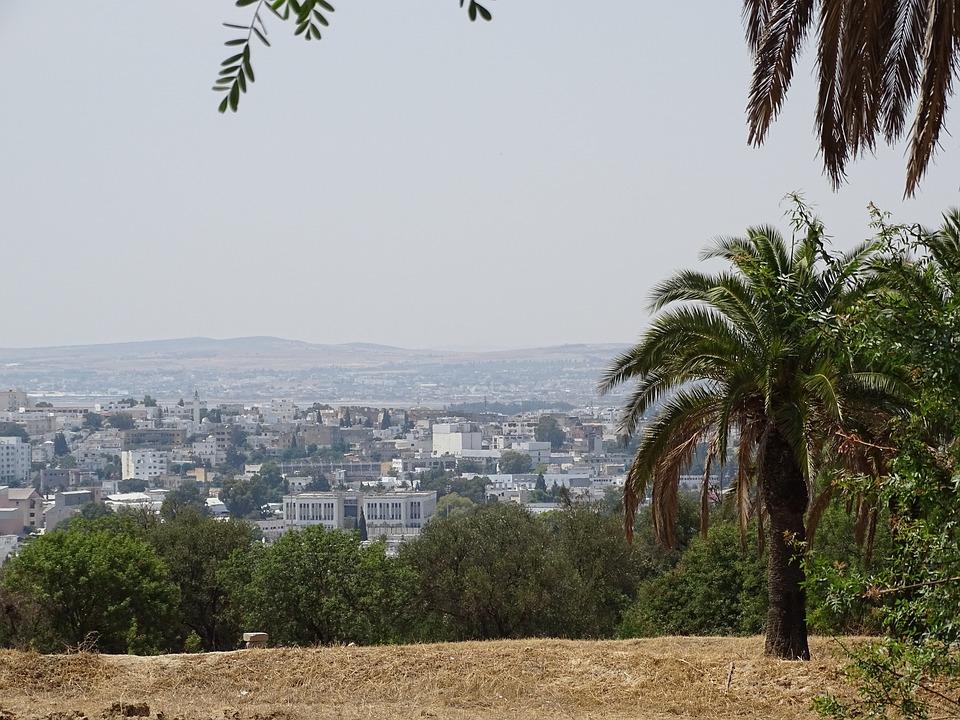 Tunisia, Tunis, City, Tree, Palm, Landscape