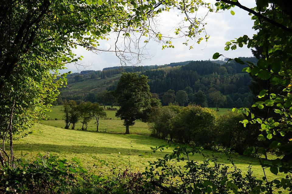 Tree, Nature, Landscape, Panorama