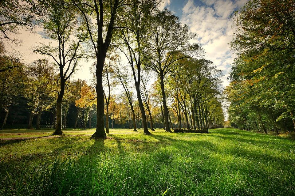 Landscape, Trees, Park, Nature, Grass, Backlighting