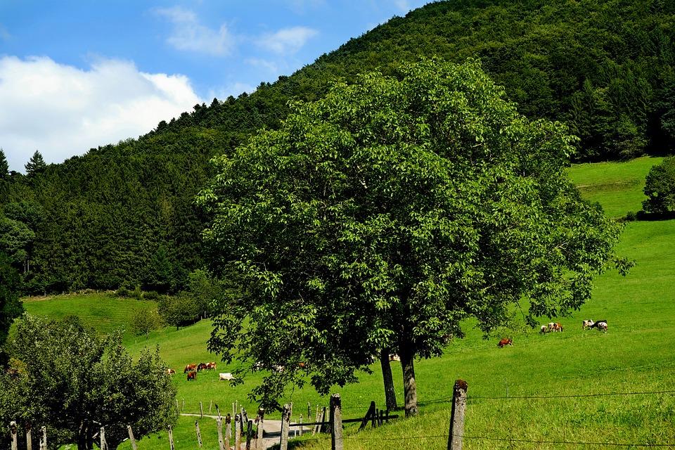 Landscape, Summer, Pasture, Away, Hiking, Sky, Clouds