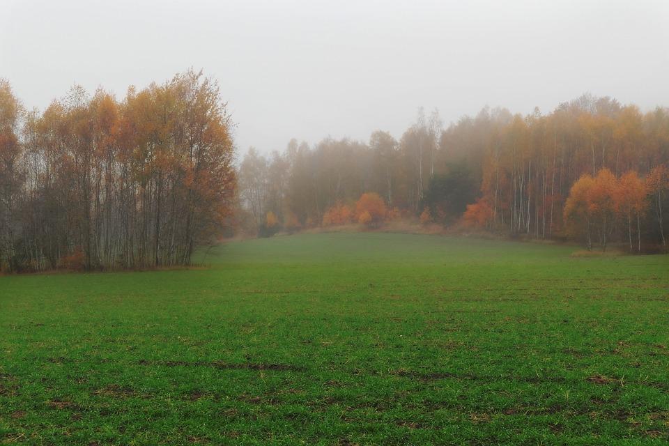 Autumn, Forest, Nature, Landscape, Fog, Leaves, Path