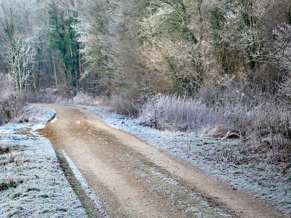 Path, Winter, Frost, Cold, Frozen, Nature, Landscape