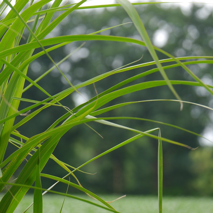 Grass, Nature, Grasses, Landscape, Game Grass, Plant