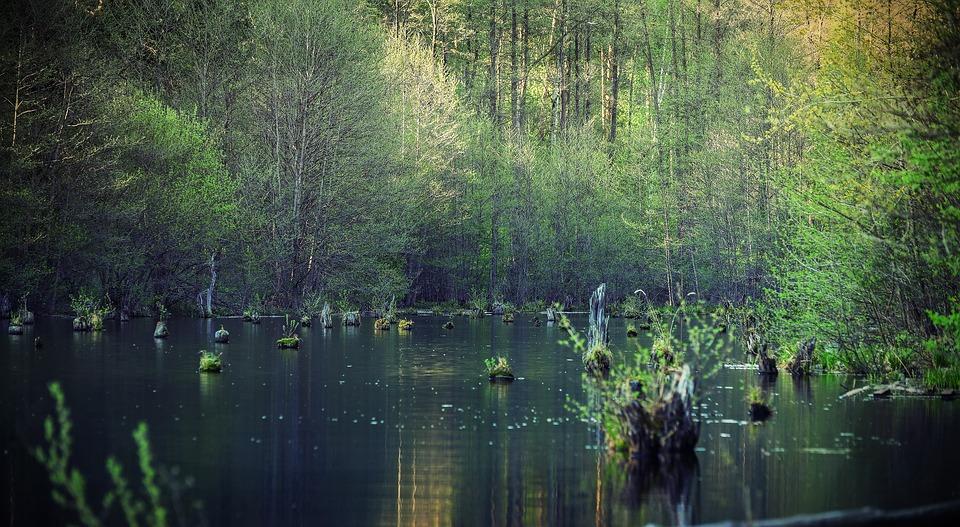 Water, Nature, Reflection, River, Lake, Pond, Landscape