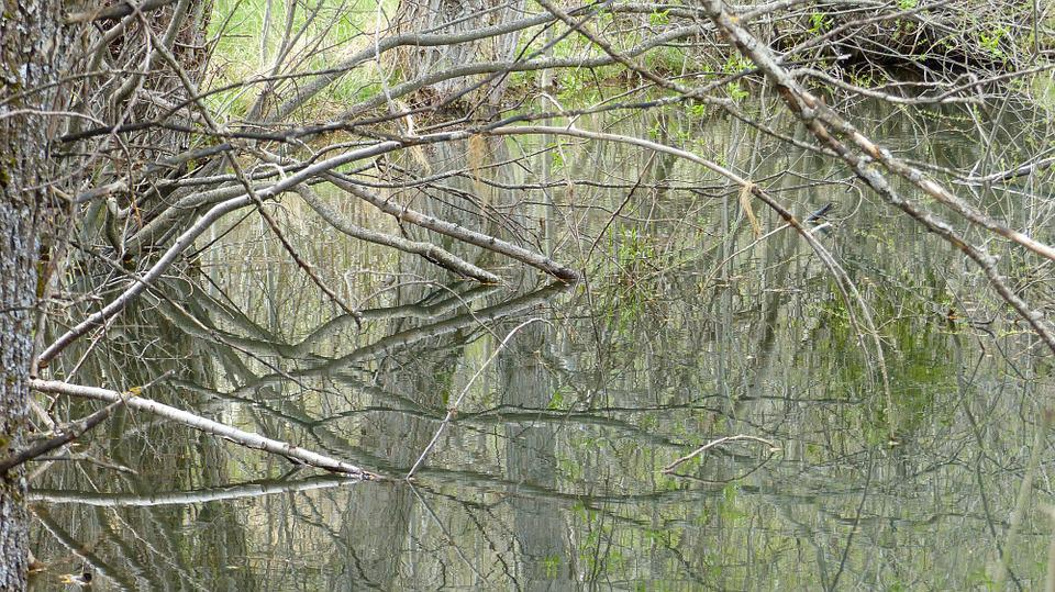 Water, Nature, Pond, Marsh, Landscape, Reflections