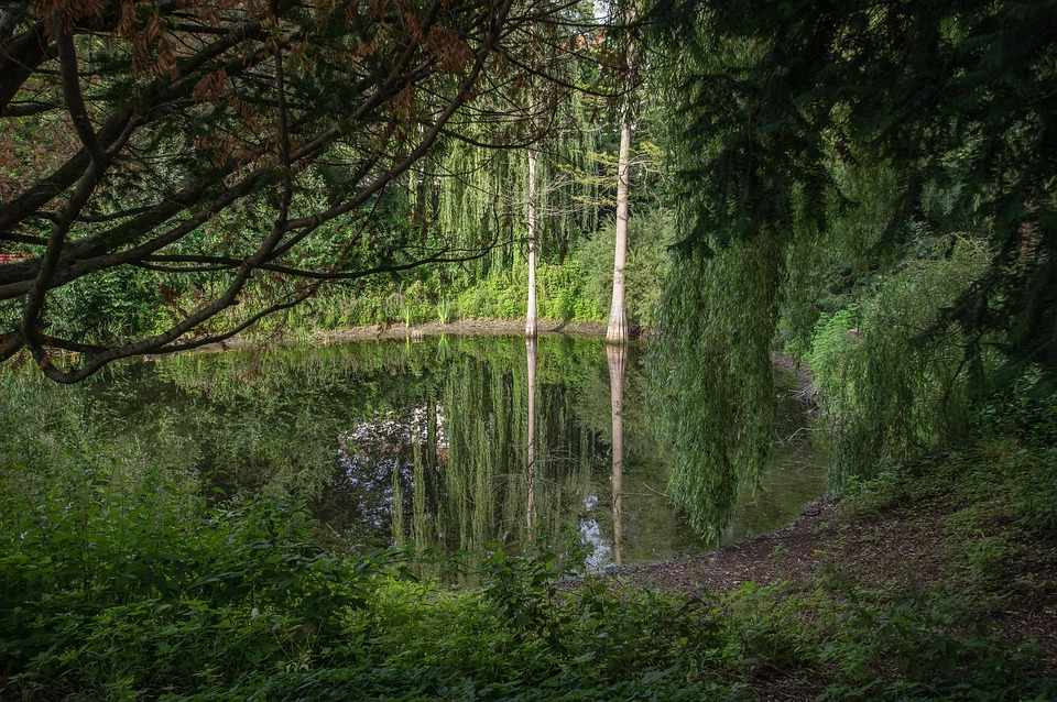 Lake, Pond, Water, Nature, Landscape, Waters, Mood
