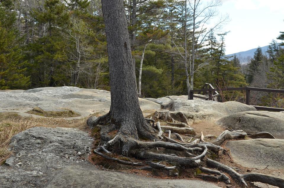 Tree, Root, Tree Root, Rock, Bald, Landscape, Nature
