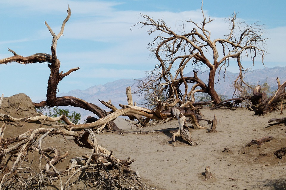 Death Valley, Scrubs, Sand, Dunes, Scenery, Landscape