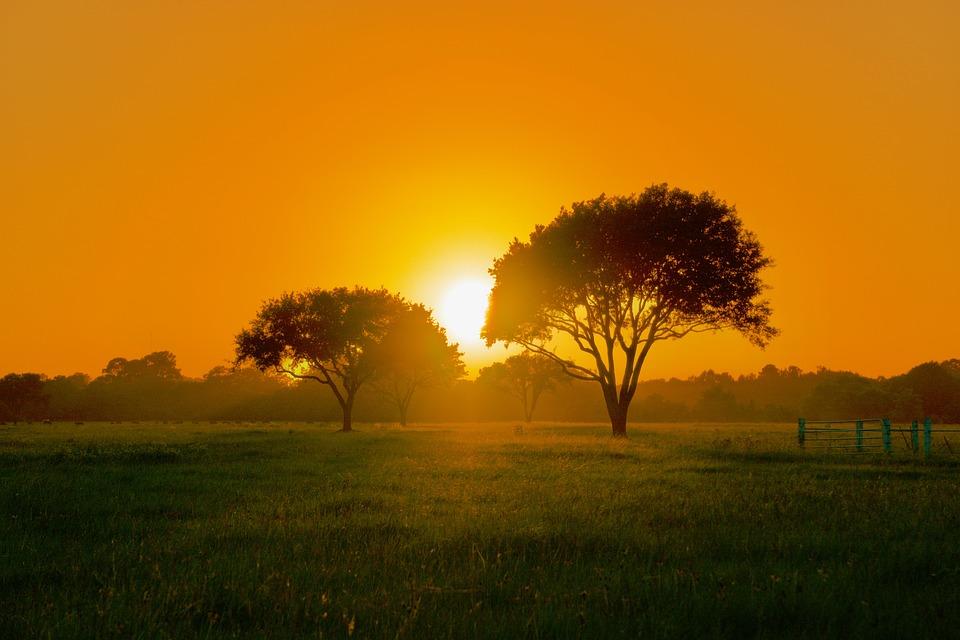 Sunset, Trees, Scenery, Nature, Sky, Landscape, Scenic