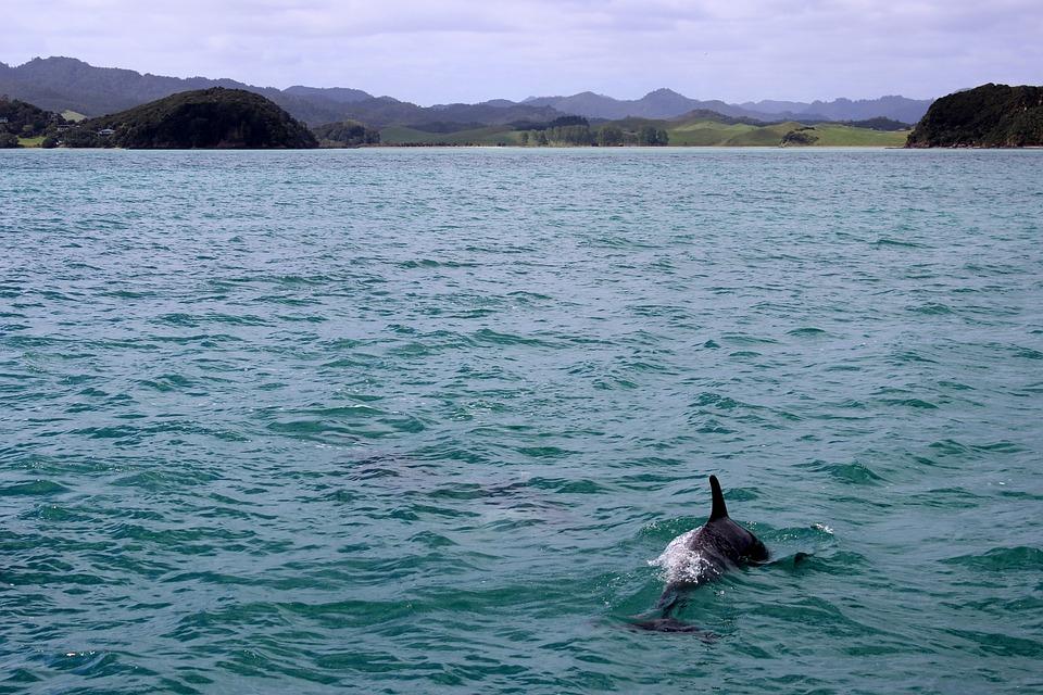 Sea, Dolphin, Marine Mammals, Dolphins, Swim, Landscape