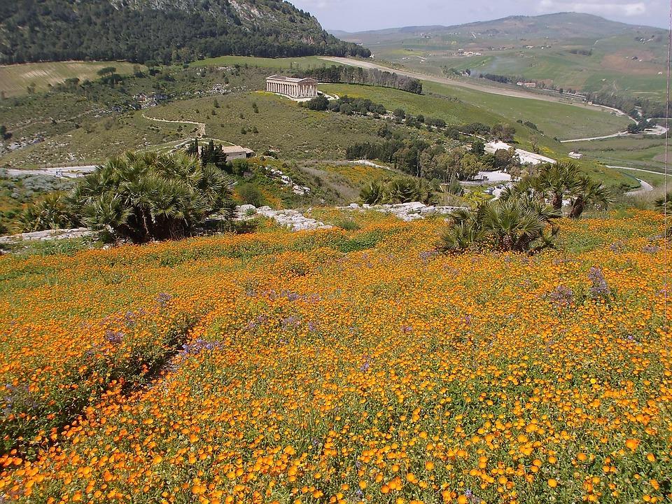 Sicily, Temple, Sea Of Flowers, Landscape