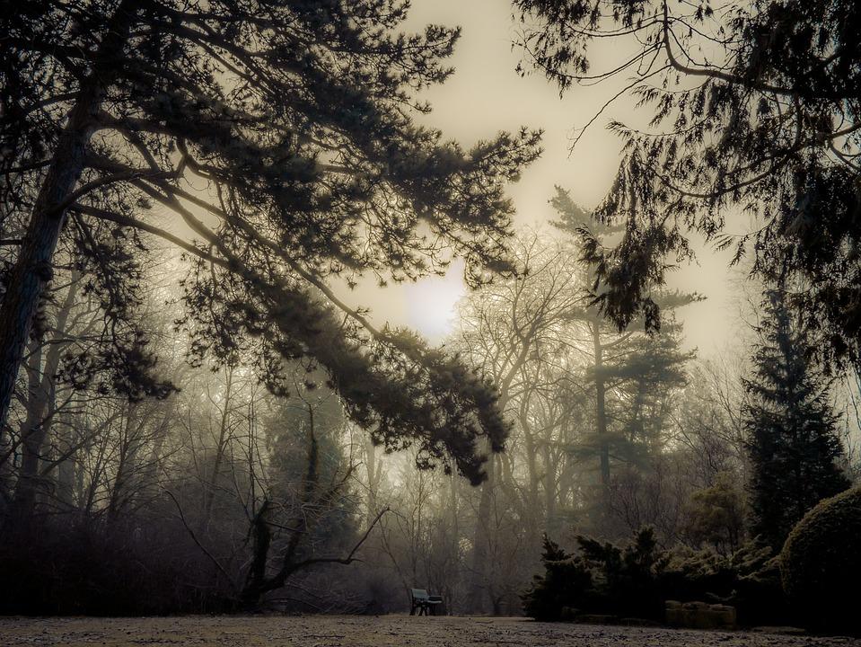 Tree, Nature, Landscape, Season, Branch, The Fog, Park