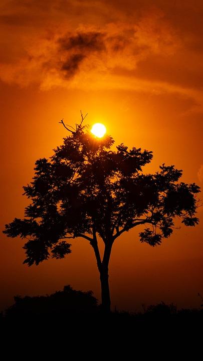 Tree, Shadow, Nature, Light, Landscape, Sun, Autumn
