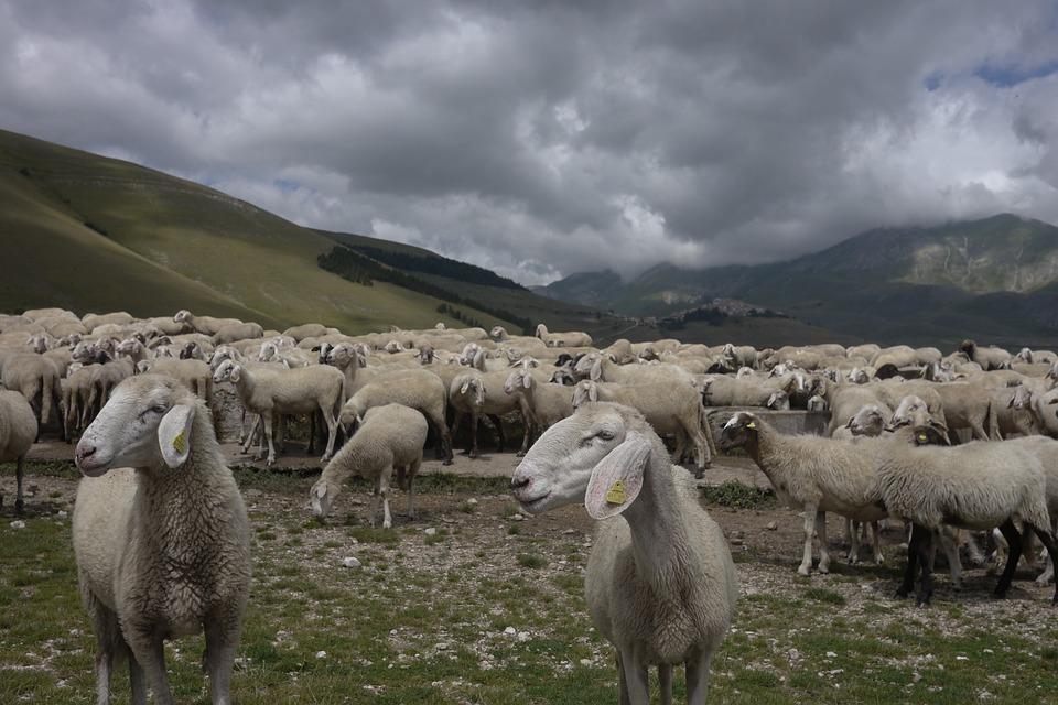 Sheep, Pasture, Sibillini, Mountain, Clouds, Landscape