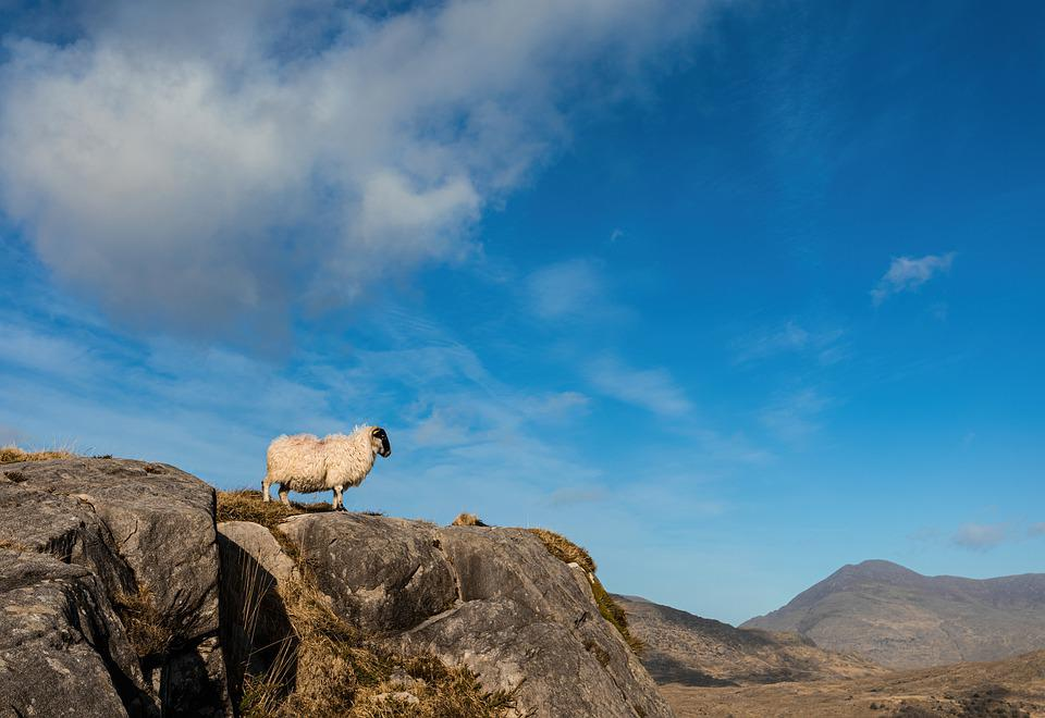Sheep, Mountains, Rural, Ireland, Nature, Landscape